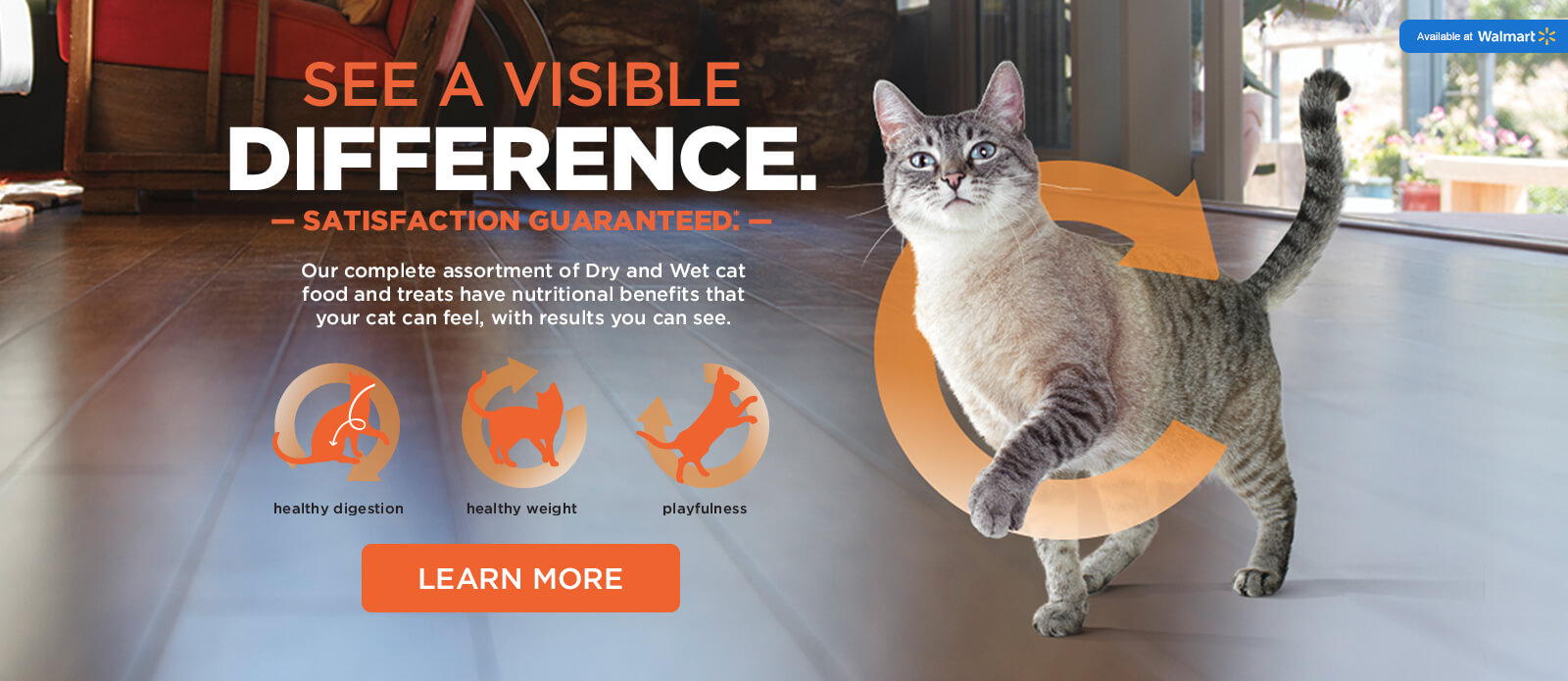 HUB-IamsVisibleDifference-Cat-Desktop